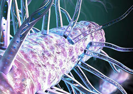 Bacterial hairs power nature's electric grid. (Image credit: Ella Maru Studio)